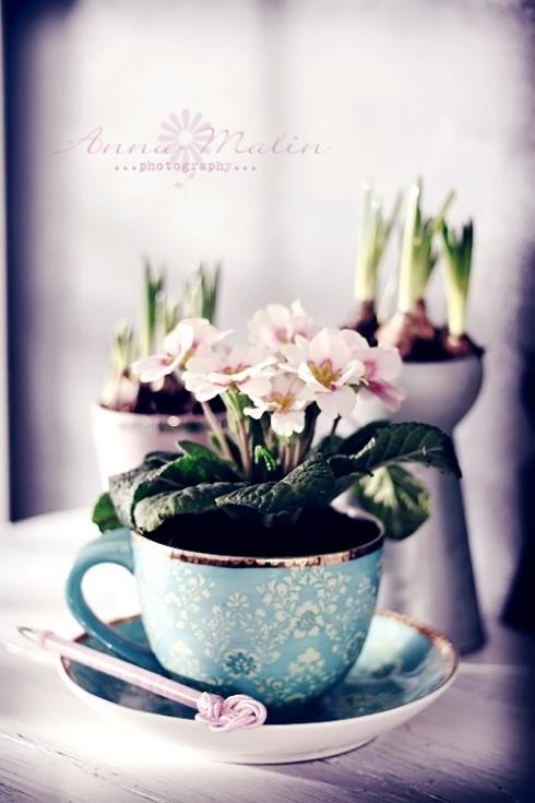 Teecup Garden